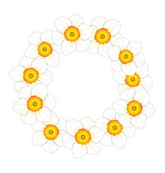 white daffodil - narcissus flower wreath vector image