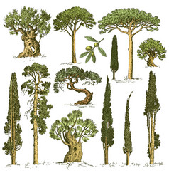 Big set engraved hand drawn trees include pine vector