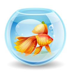 goldfish in an aquarium vector image