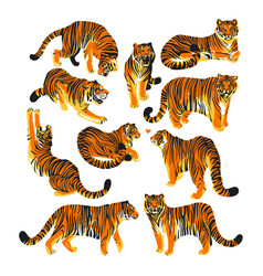 Graphic collection of tigers in different poses vector
