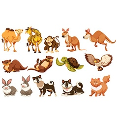 Set of different types of animals vector image vector image