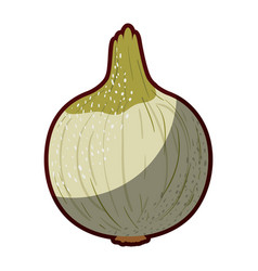 white background of onion with stains and half vector image vector image