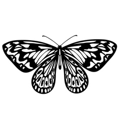 Beautiful black and white butterfly isolated on wh vector image