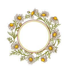 Chamomile flower frame vector