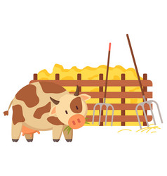 Cow walking hay bale and fence wood vector
