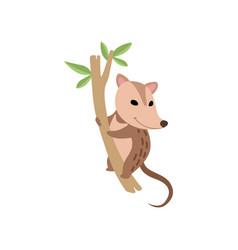 cute opossum wild animal on tree branch vector image