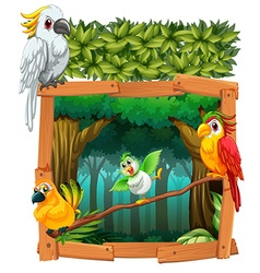 Four birds living in the jungle vector image