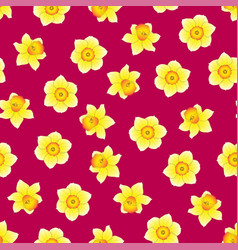 Yellow daffodil - narcissus flower on pink vector