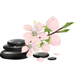 Spa background with cherry blossoms vector image