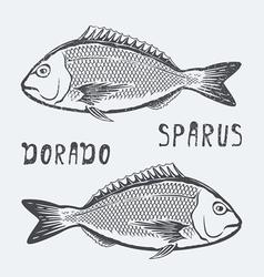 Dorado sparus fish vector image