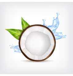 Coconut with green leaves vector