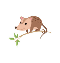 Cute opossum sitting on tree branch adorable wild vector