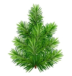 Green young Christmas tree isolated on white vector image