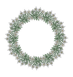 summer wreath with edelweiss flowers vector image