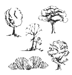 Hand drawn trees set vector image vector image