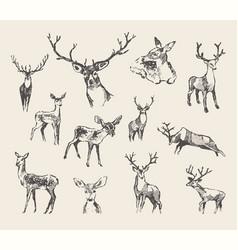 set drawn noble deers sketch vector image vector image