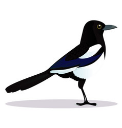 Magpie bird vector