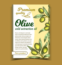 olive oil premium quality product poster vector image
