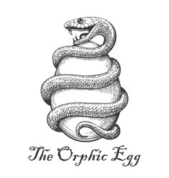 orphic egg tattoo vector image