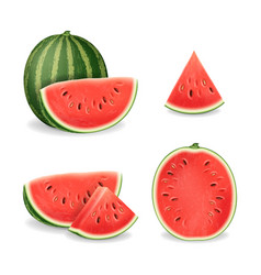 realistic detailed 3d sliced ripe red watermelon vector image