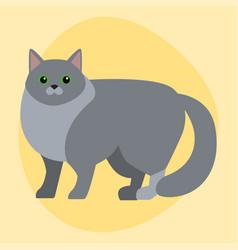 cat breed siberian cute pet portrait fluffy gray vector image