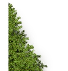 Background with fir branches vector