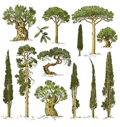 Big set of engraved hand drawn trees include pine vector