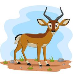 cartoon impala in field vector image