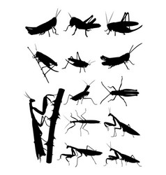 Grasshopper and praying mantis detail silhouettes vector