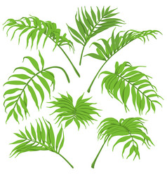 Green palm leaves isolated vector