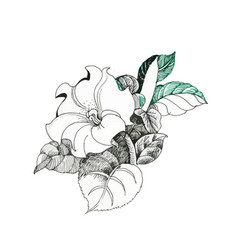 hand drawn flower isolated on white background vector image