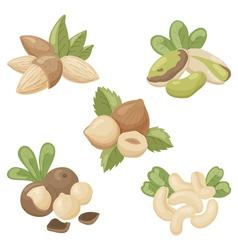 Nuts vector