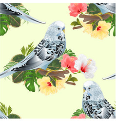 Seamless texture budgerigar home pet blue pet vector
