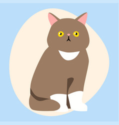 cat breed cute pet brown fluffy young adorable vector image