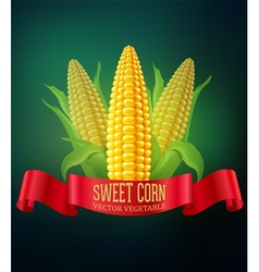 background with cobs of corn and red ribbon vector image vector image