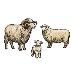 White sheep isolated vector image vector image