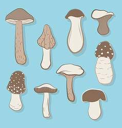 different types mushrooms vector image
