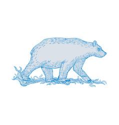 Polar bear walking side drawing vector