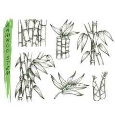 Set isolated sketches bamboo stalk vector