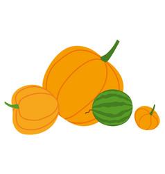 watermelon and pumpkins or squash autumn harvest vector image