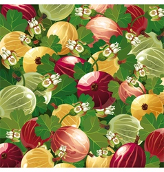background of colorful gooseberry vector image vector image