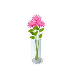 isometric pink bouquet flowers in transparent vector image
