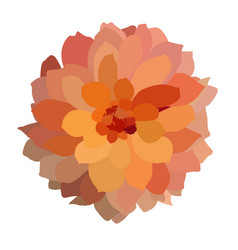Multicolored colorful dahlia isolated on white vector