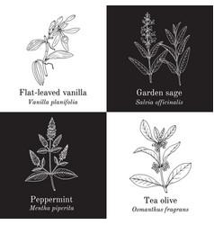 Set aromaric edible and medicinal plants vector
