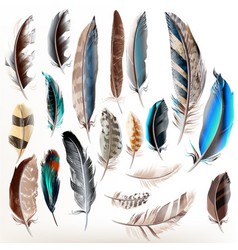 Set of realistic colorful feathers vector