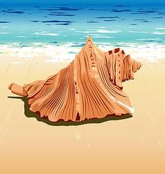 Shell at beach vector
