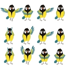 Flat icons of titmouse set vector image vector image