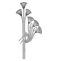 Idealized lotus and papyrus comes from an vector