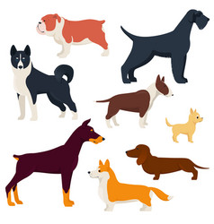 Set different breeds dogs vector