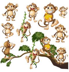 wild monkeys in different actions vector image vector image